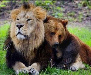animal-friendship-18